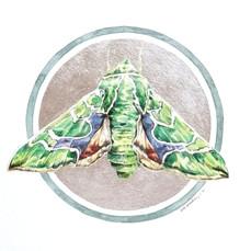 Lepidoptology addict nº4