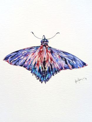 Lepidoptera mauvis