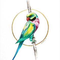 Ornithology addict 84