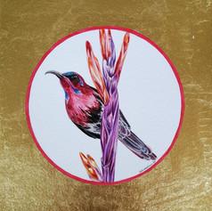 Ornithology addict #109