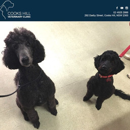 Hank and Alfie looking very handsome together in clinic today 🐾