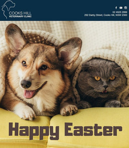 We hope you are all having a happy and safe Easter long weekend at home 🐾
