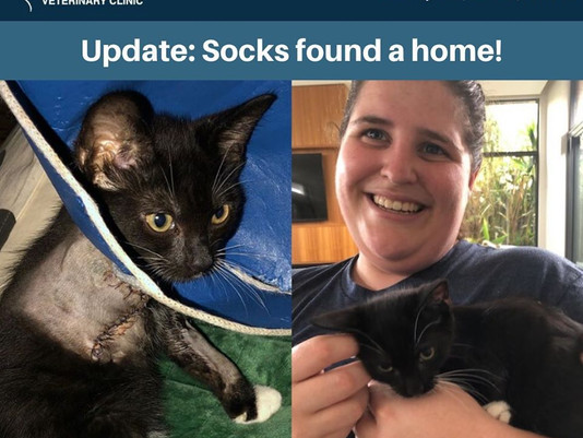 Update: Socks has found his forever home 🐾