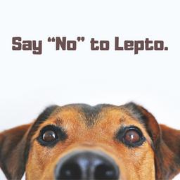 "Say ""No"" to Leptospirosis."