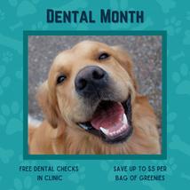 Dental Month!