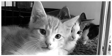 cookshillvetclinic_cats.jpg