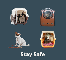 Keep your pets safe when travelling to the Clinic