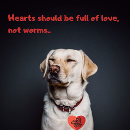 Do you know about Heartworm?
