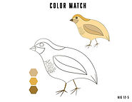 bird color match.jpg