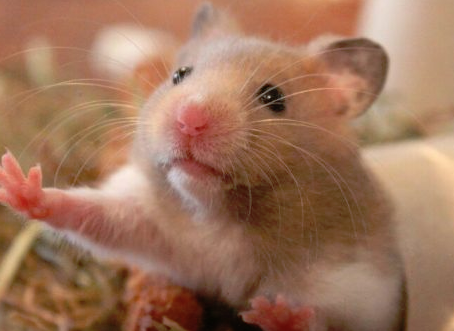 Hamsters Are Screwed