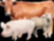 livestock-big-img1.png