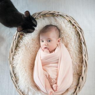 Séance nouveau-né avec chat
