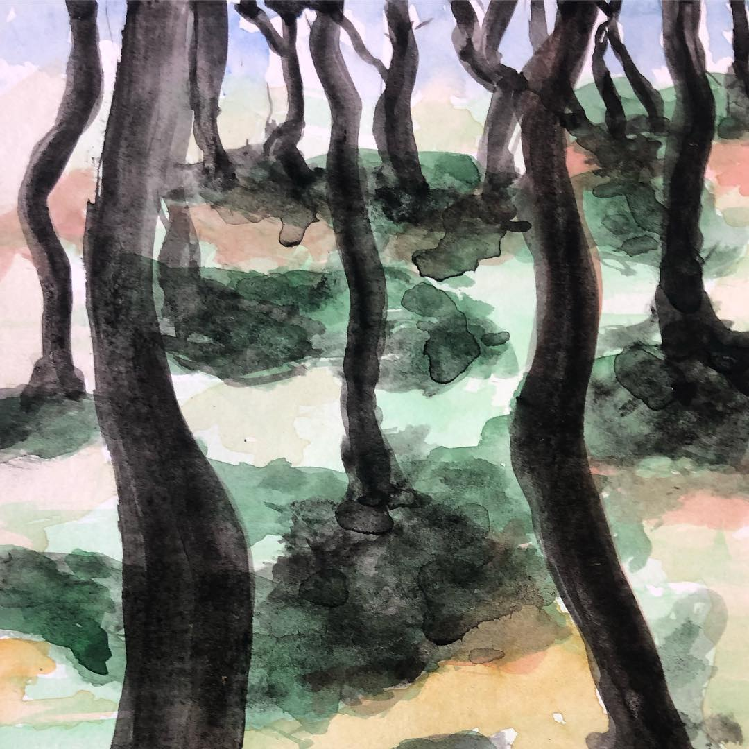 sombras de pinos