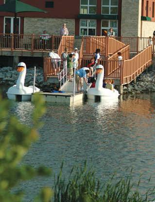 Swans at the Marina