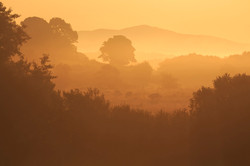 Hedgerows at Sunrise, County Down