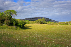 The Meadow at Burren National Park