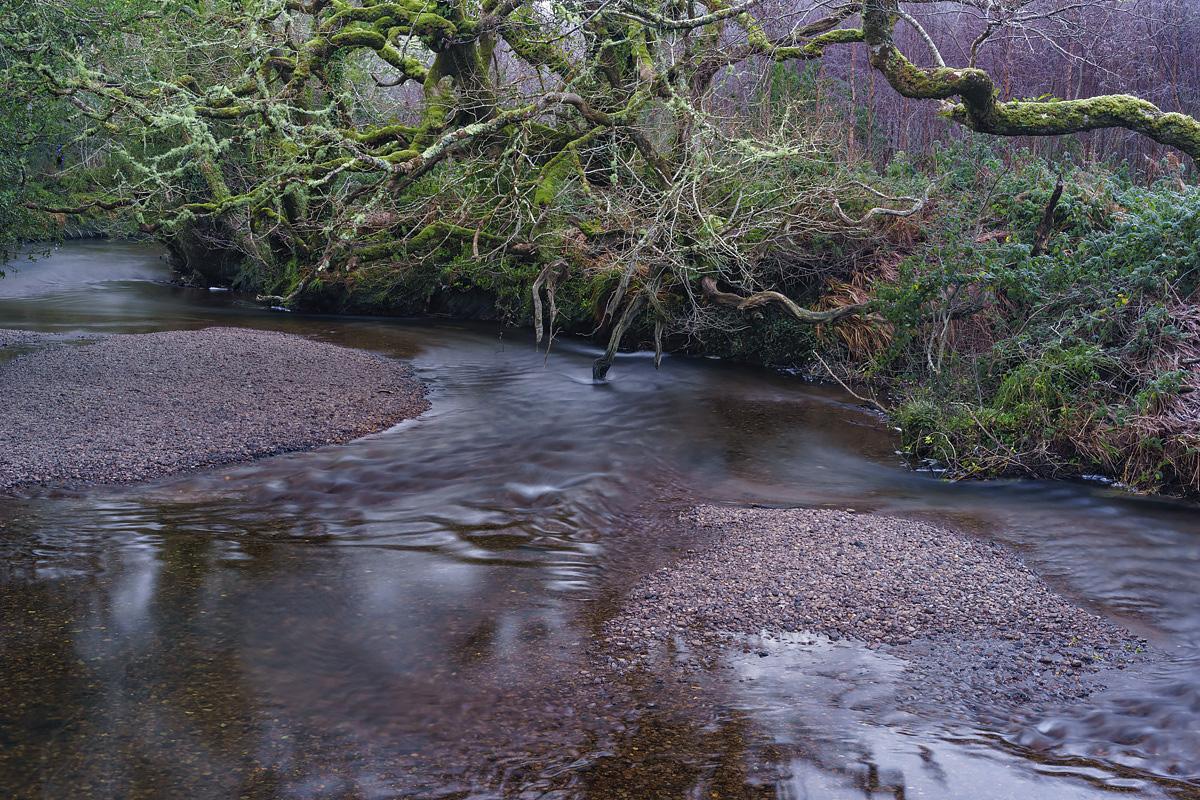 Glengarriff Nature Reserve, County Cork