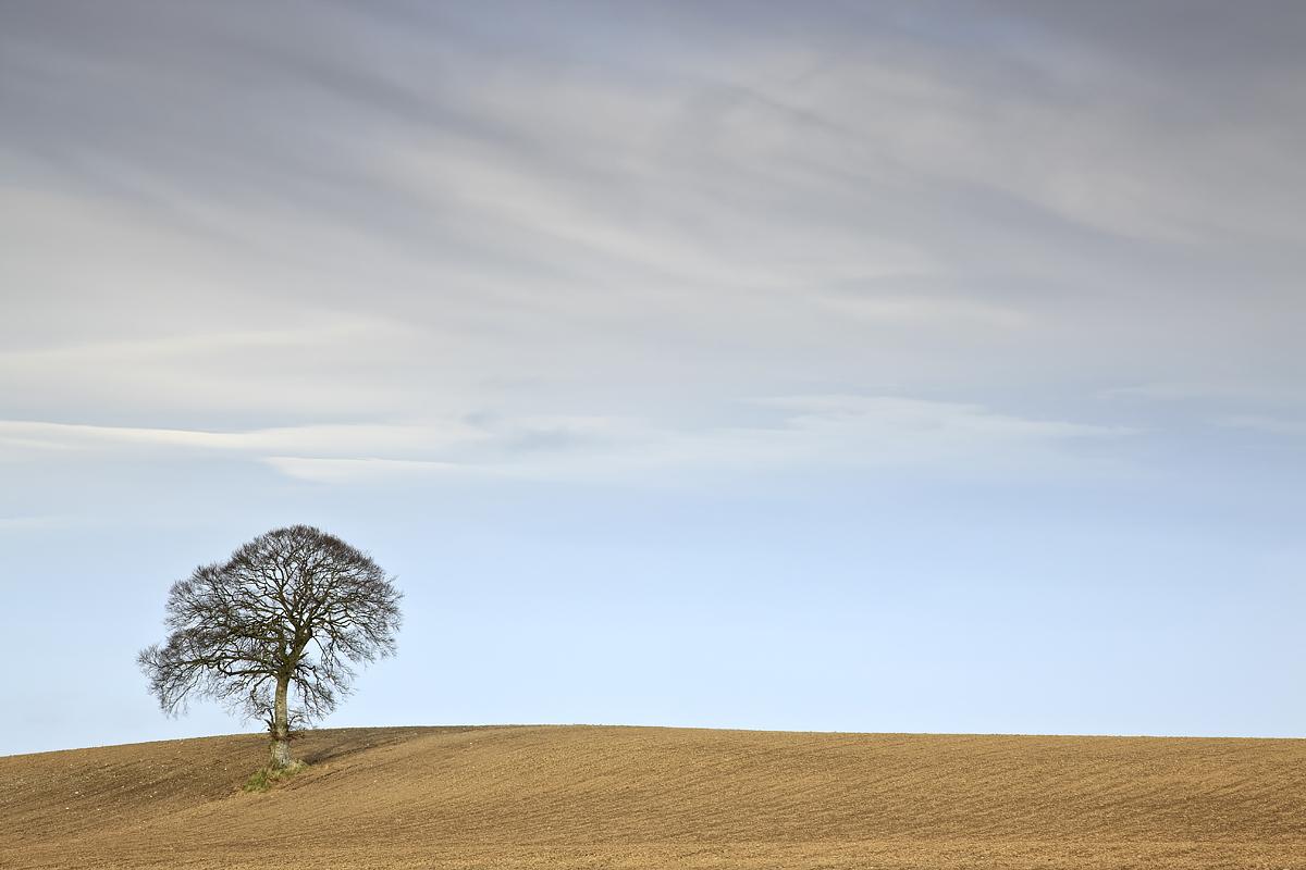 Tree & Fields, County Carlow