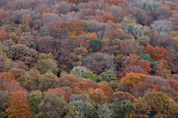 Autumn Forest, Glenade