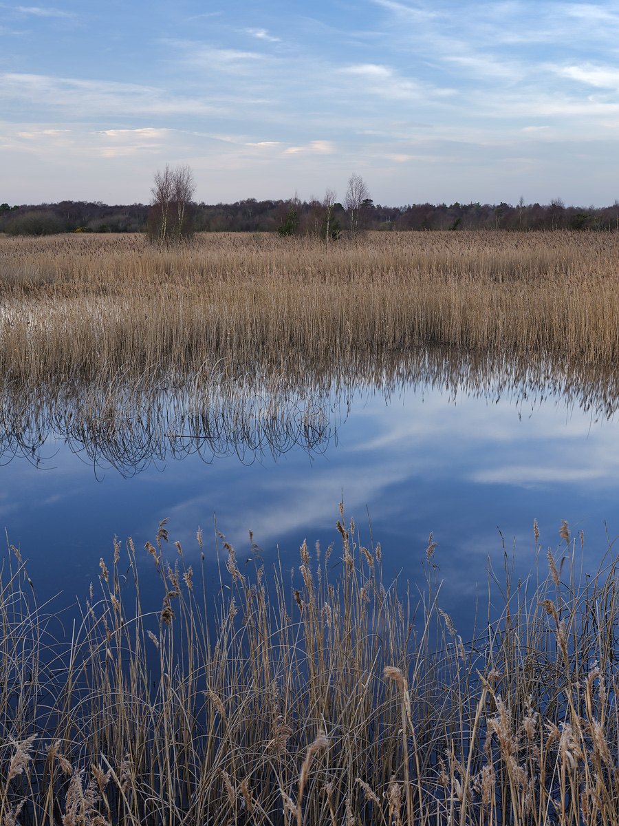Turraun Wetlands, Co. Offaly