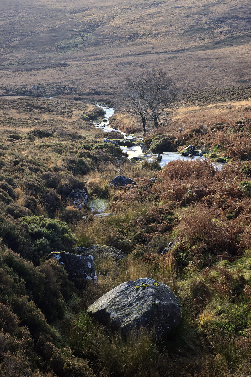 Blanket bog in the Wicklow Mountains