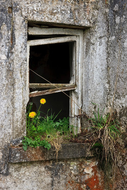 Cottage Window, County Roscommon