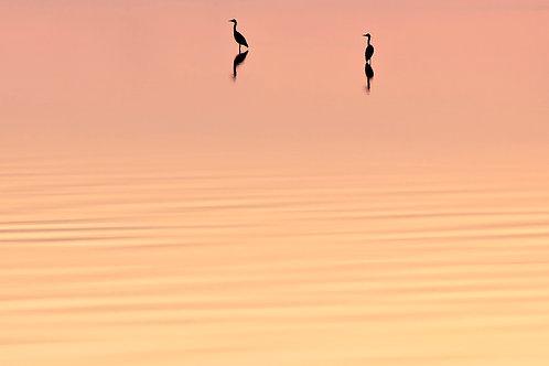 Herons at Dusk