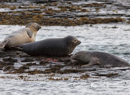 On Seals