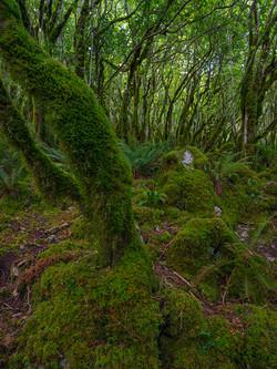 Hazel Forest