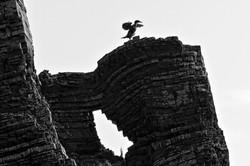 Cormorant Dance, County Kerry