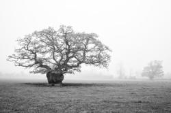 Lone Oak, County Tipperary