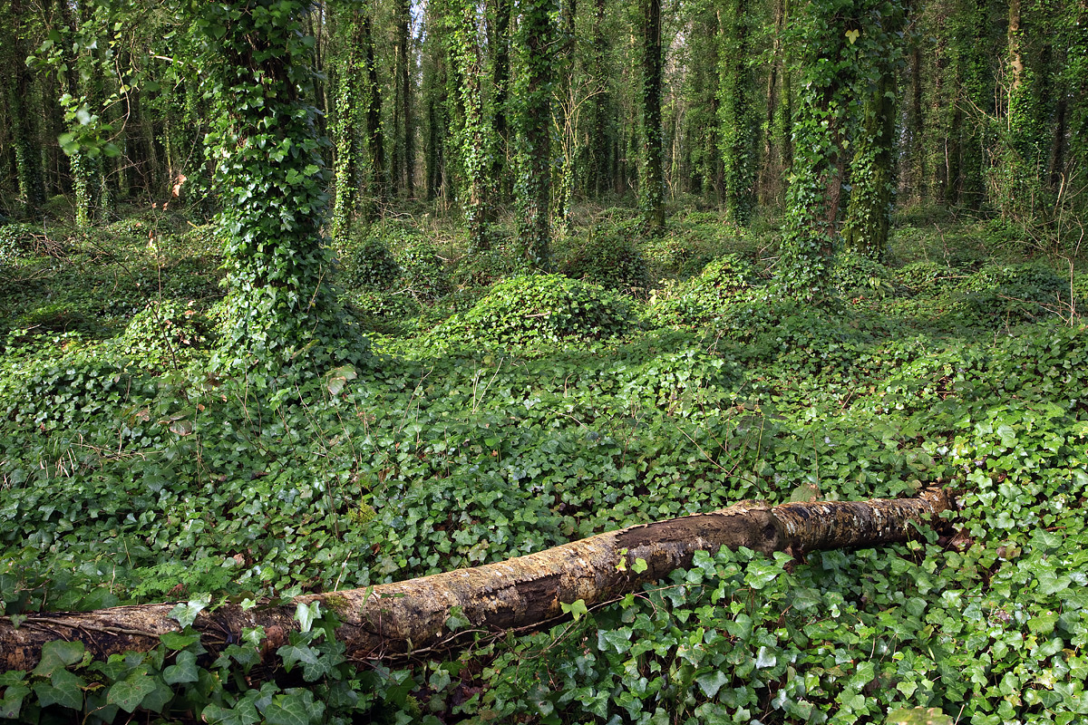 Dromore Woods, County Clare