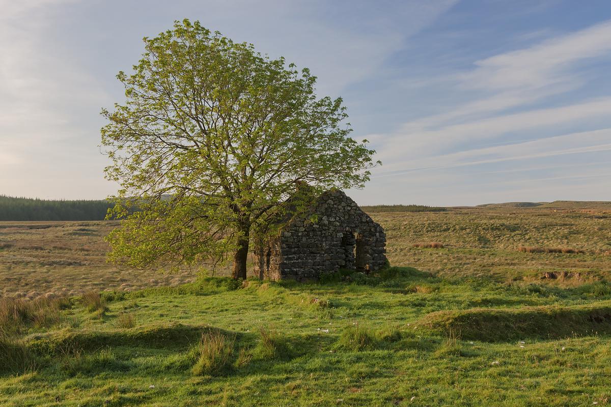 Cottage & Tree, Glenariff