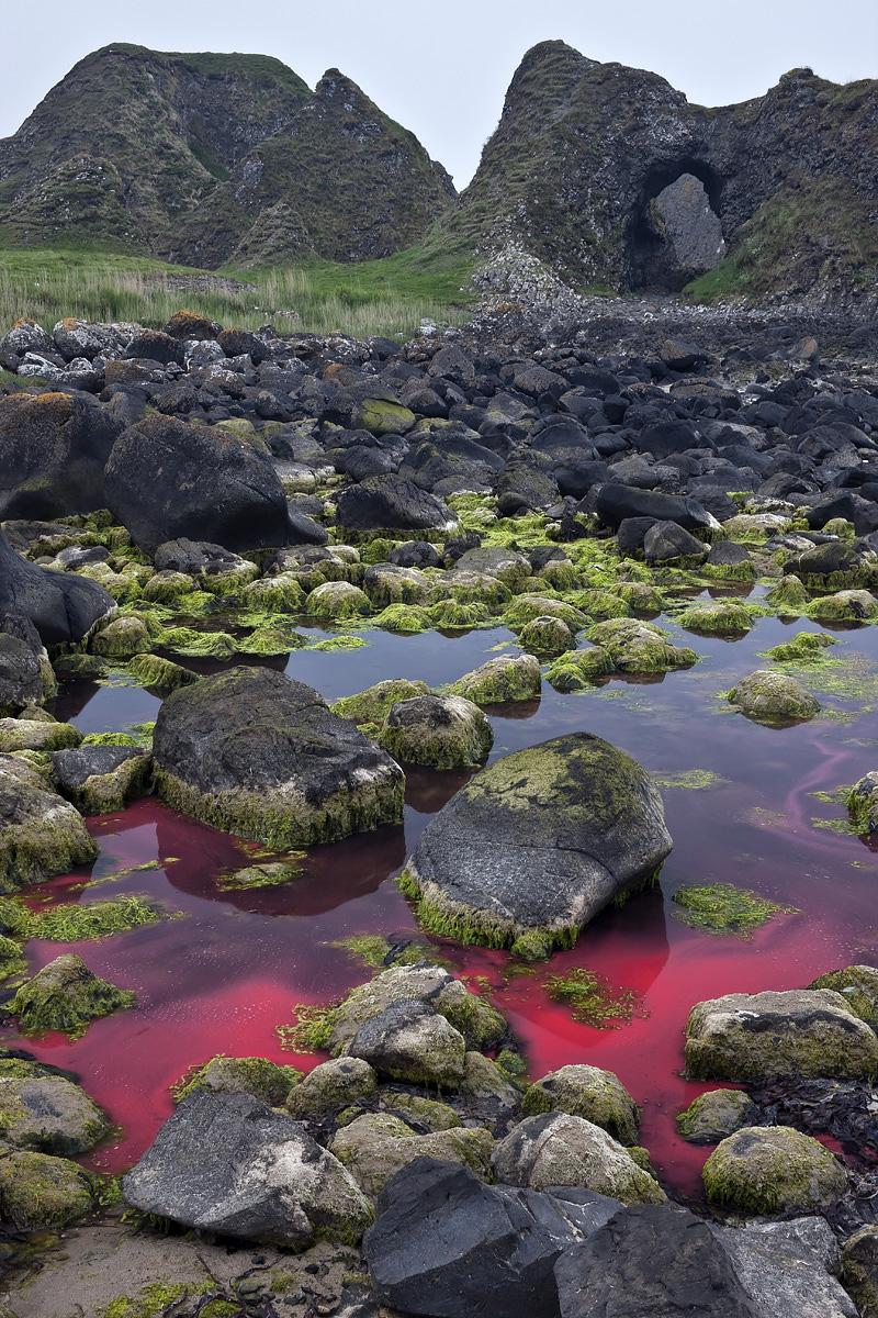 Red Tide, Ballintoy