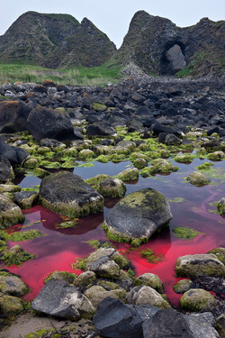Red Tide, Ballintoy