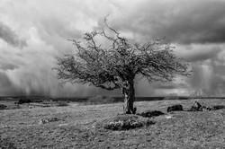 Hawthorn & Hailstorm, County Westmeath