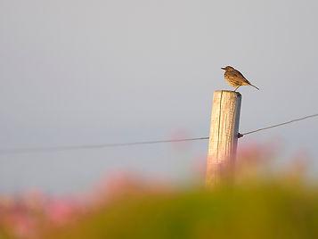CKP_Birds_2705202002.jpg