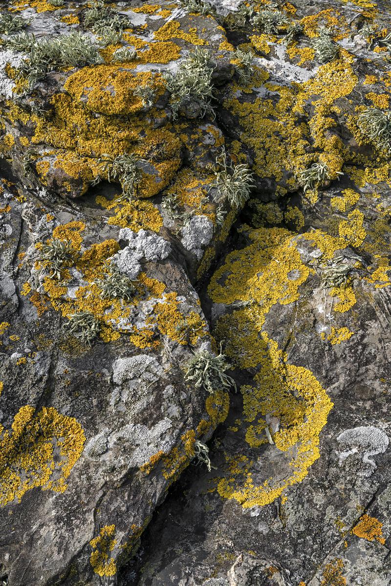 Lichen I