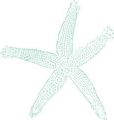 35072-sea-blue-starfish-clipart.png