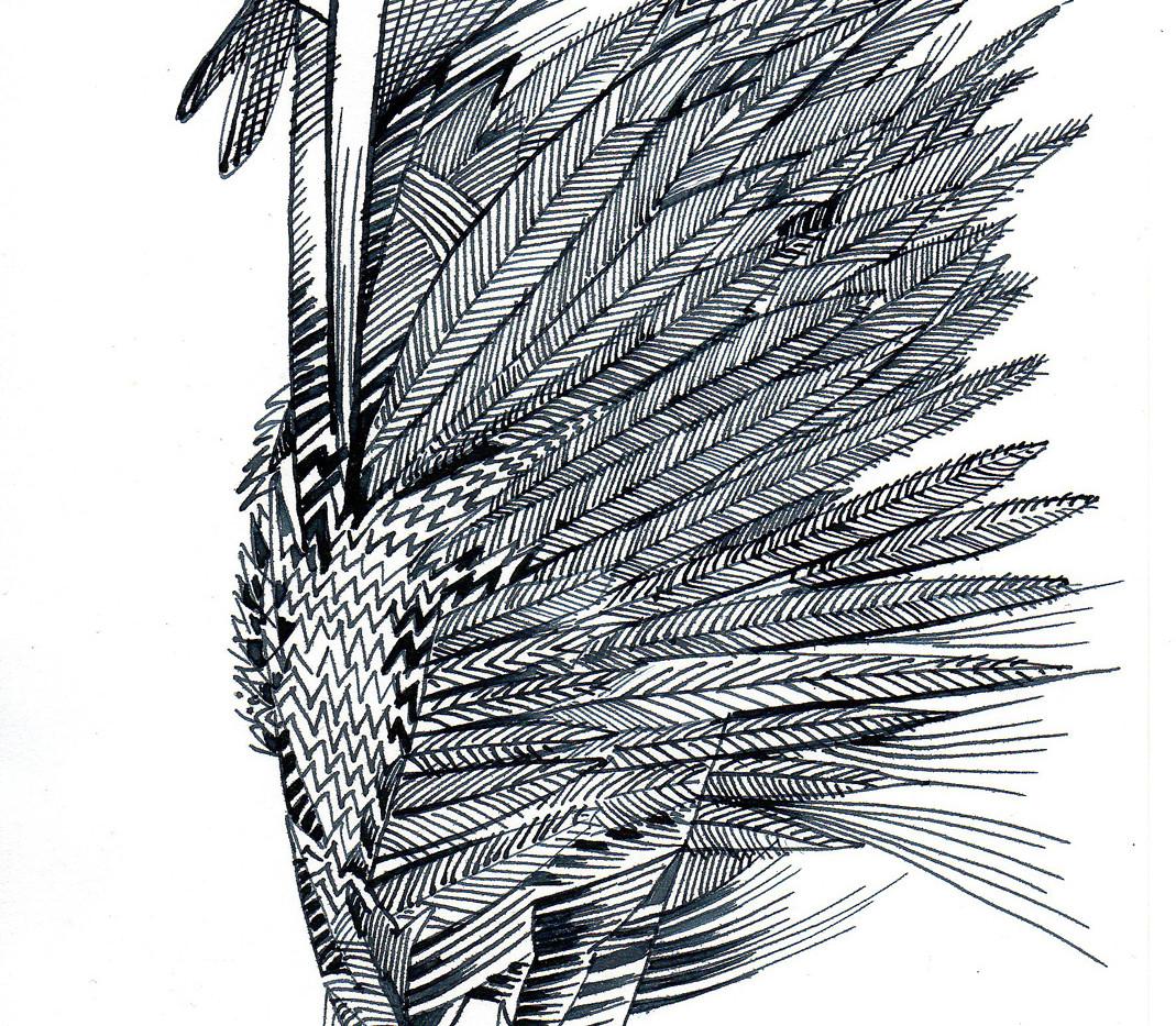 Federzeichnung Schräge Vögel