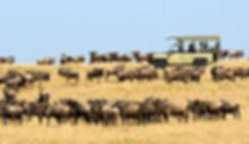 tanzania-serengeti-safari-fp.jpg