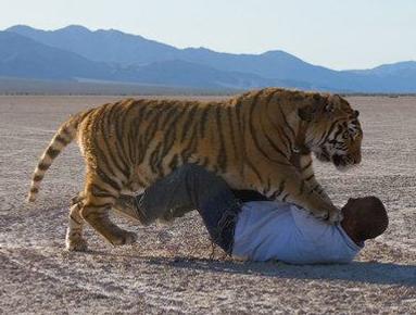 Karl-Mitchell-All-Acting-Animals-AKA-Big