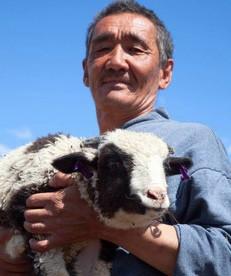 Good shepherding?