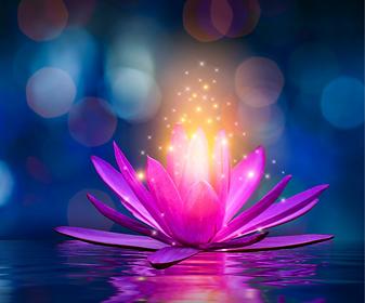 lotus-pink-light-purple-floating-light-s