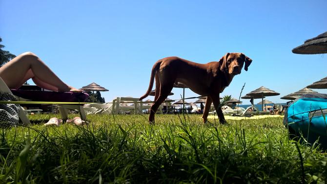 Wakacje z psem - podstawowe porady.