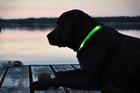 Pies w ciemności!