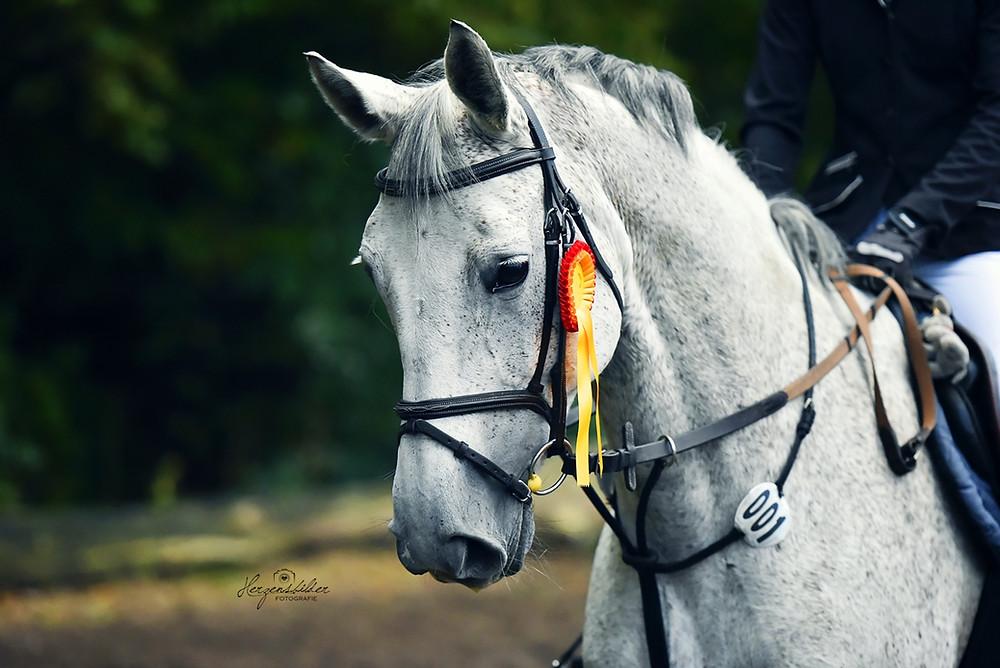 Pferdefotografie Halle Reiterhof Teicha Turnier Friese