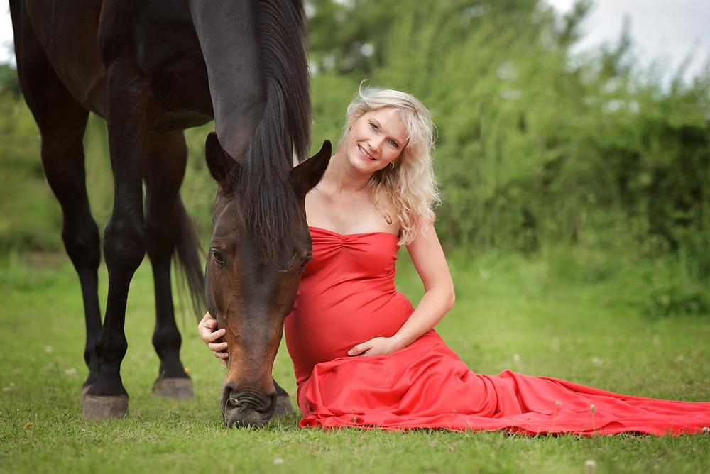 schwanger  Halle Pferd
