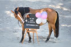 Pferd Babybauch Fotografie Halle