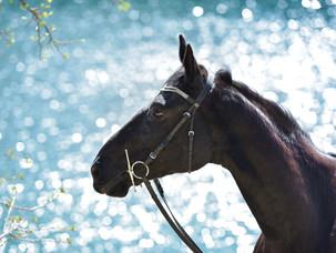Pferde-Portrait am Steinbruch bei Halle